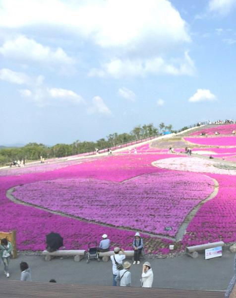 茶臼山高原 - 芝桜