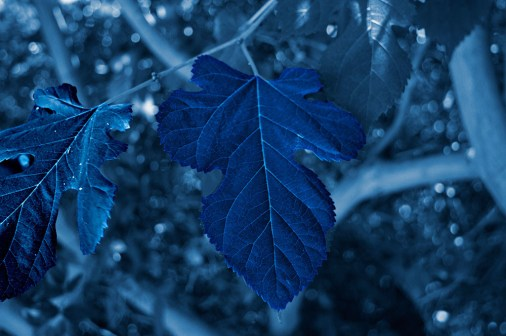 Cyanotype Photography [pt.24] (1)
