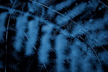 Cyanotype Photography [pt.24] (5)