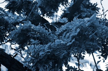 Cyanotype Photography [pt.30] (4)