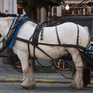 Лошадки, запряжённые в ретро-дилижанс на Grote Markt