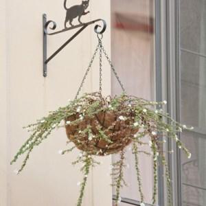 Улица Klapdorp: силуэт кота на фасадном подвесе цветочного горшка