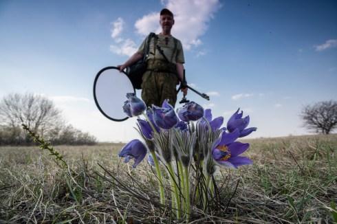 Фото: Александр Ковалевич. Прострел в Ямской степи