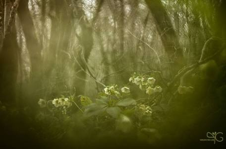 Юлия Втюрина   Волшебный лес