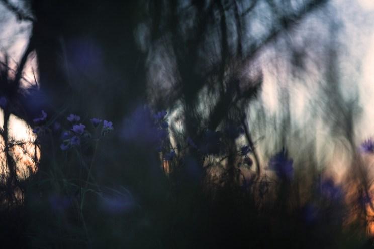 Герань. Фото Юлии Втюриной