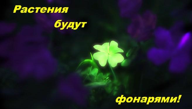 Растения будут фонарями