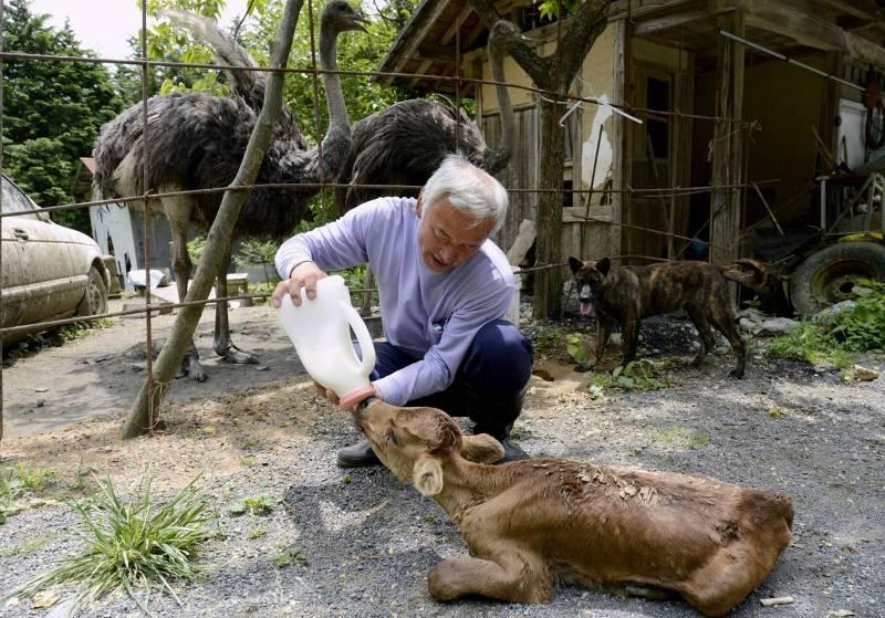 Наото Мацумура кормит животных в зоне отчуждения.