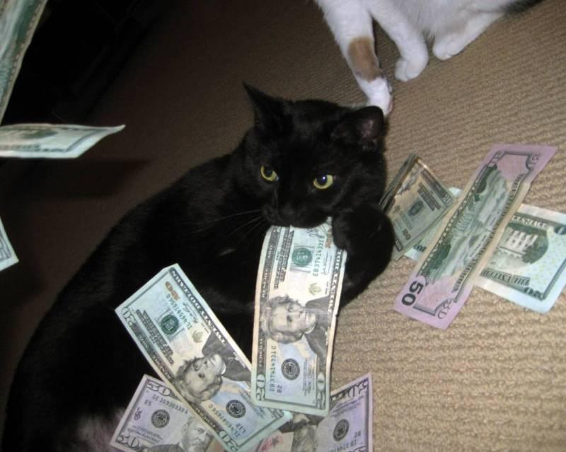 Кот. Наследство.