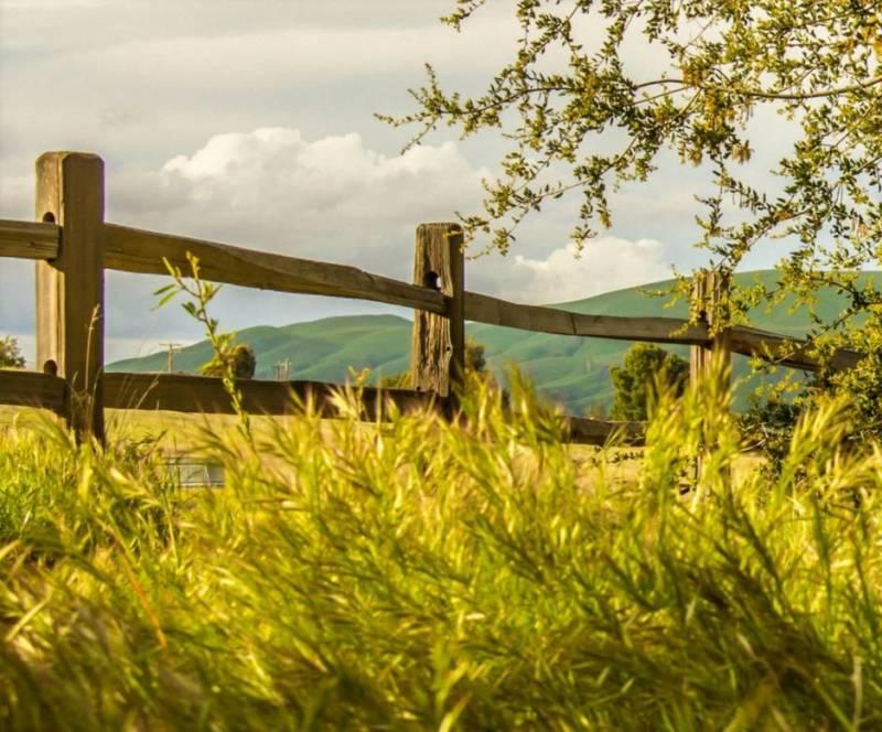 Трава забор