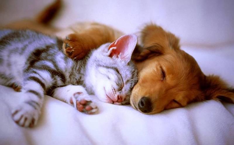 Сон у животных