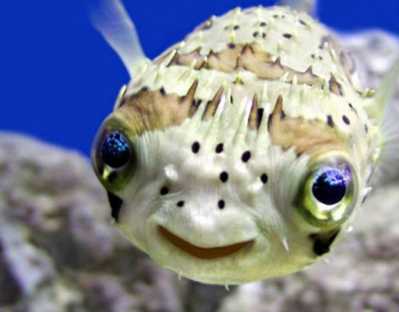 веселая рыбка улыбается