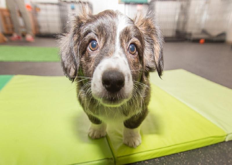 Собака, Китай, ограничения, строгие законы содержания собак