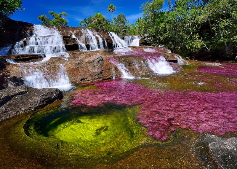 Каньо-Кристалес, радужная река, река пяти цветов, жидкая радуга Колумбия, разноцветная река в Колумбии, чудеса природы, красивые фото, красивые пейзажи