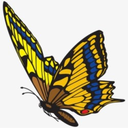 Download Transparent Background Butterfly Png For Editing PNG & GIF BASE