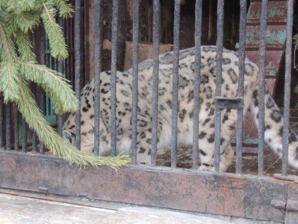 Зоопарк в Питере на Васильевском острове