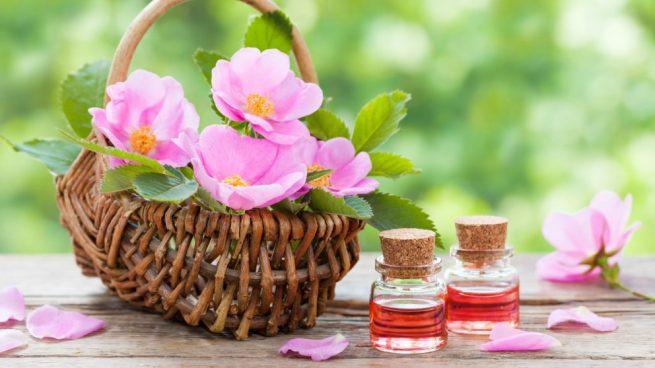 Польза цветов и ягод шиповника