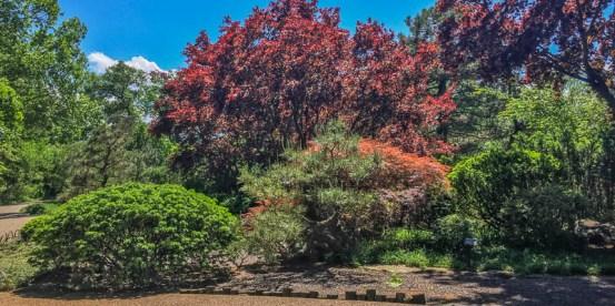 @ the Japanese Garden
