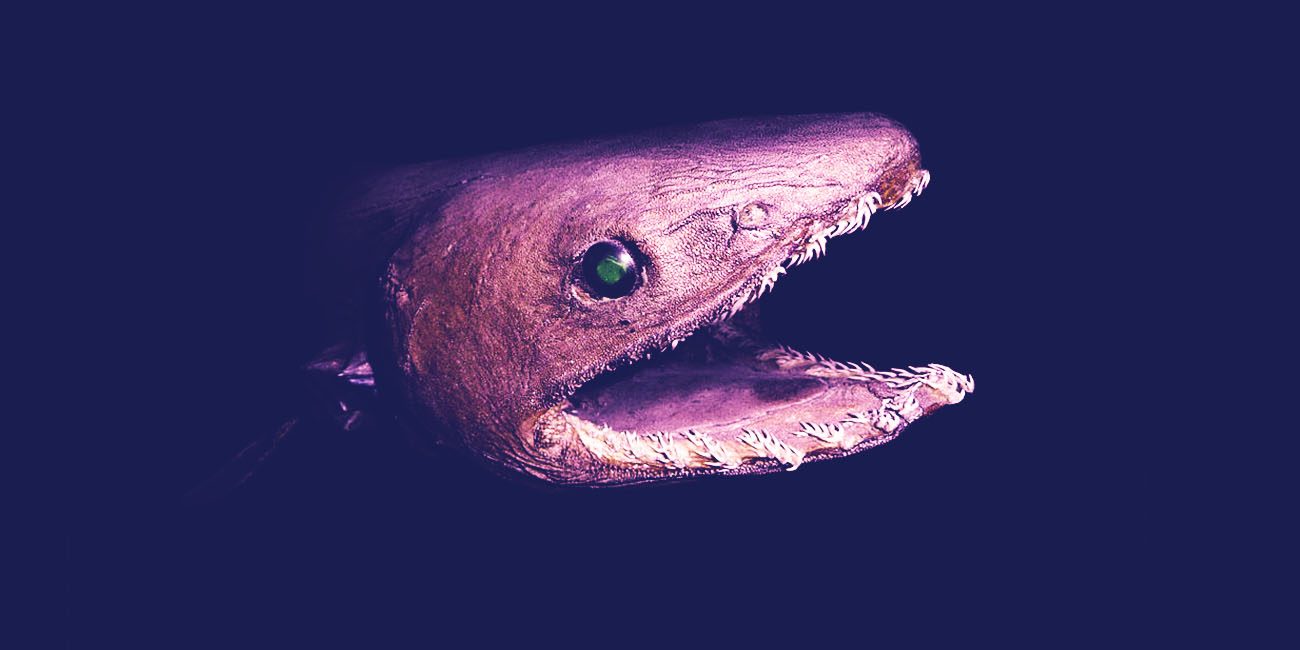 frilled shark 15 things