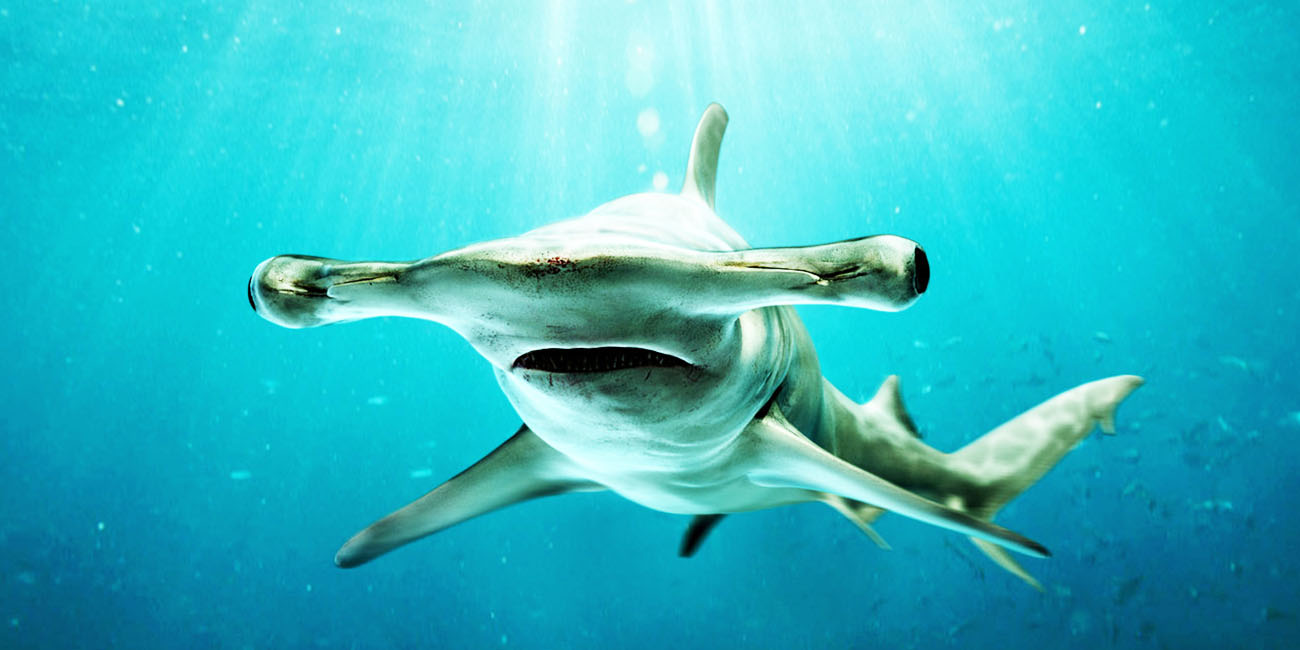 shark facts 15 things