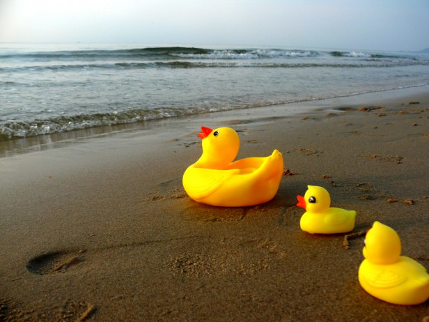 Chicago Apartments, August Events, Windy City Rubber Duck Derby