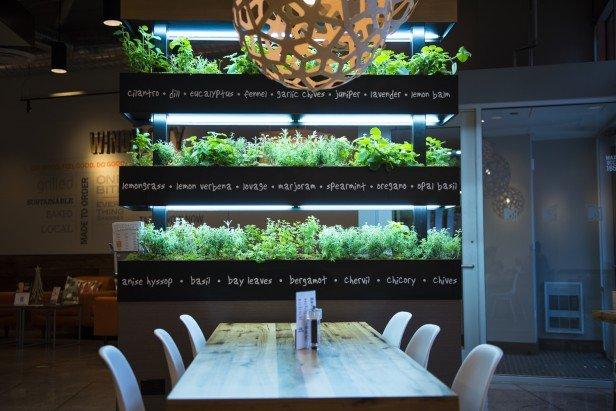 Lyfe Kitchen  Planned Property Management Inc