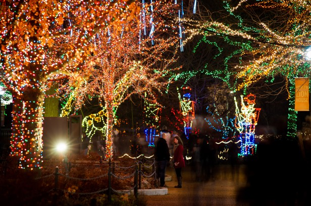 Chicago Apartments, Zoo Lights, Lincoln Park Zoo