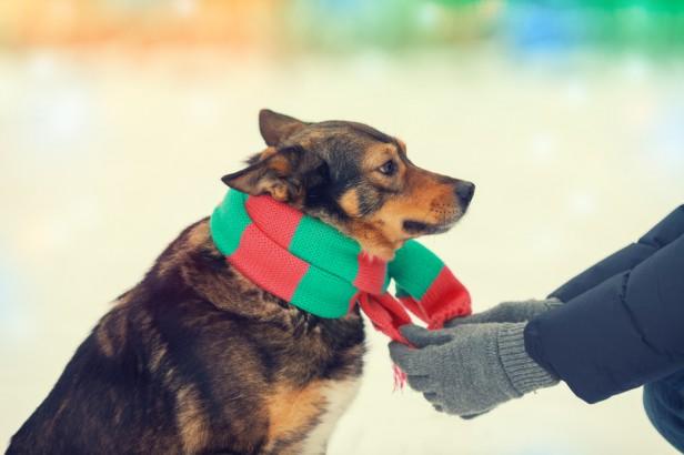Chicago Apartments, Dog Tips, Pet Clothing