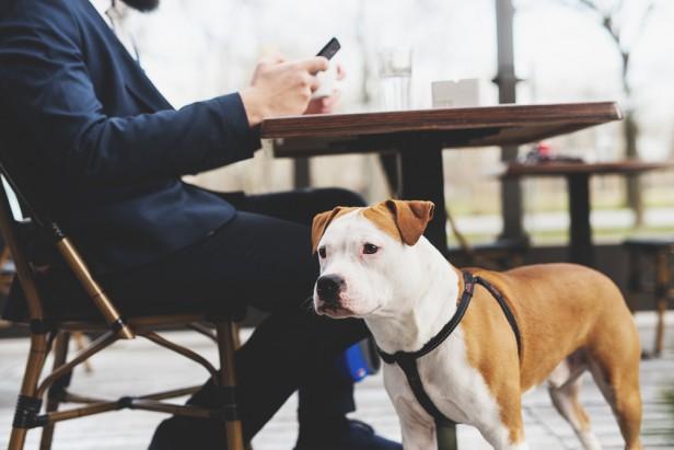 Chicago Apartments, Dog-Friendly, EZ Inn