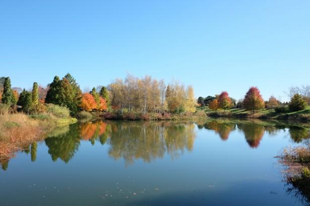 Chicago Apartments, Fall Foliage, Chicago Botanic Garden