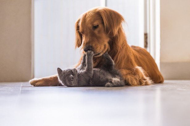 Chicago Apartments, Cats vs. Dogs