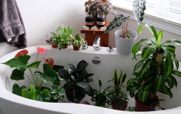 Chicago Apartments, Houseplant Tips
