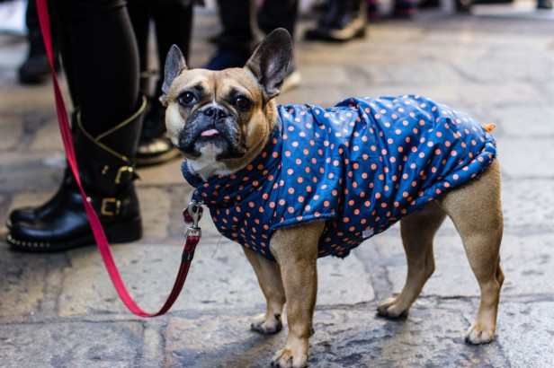 Chicago Apartments, Apartment Pet Tips, Pets in Cold Weather