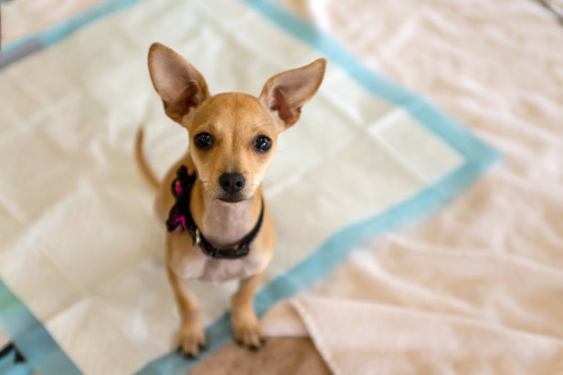 Chicago Apartments, Pet Tips