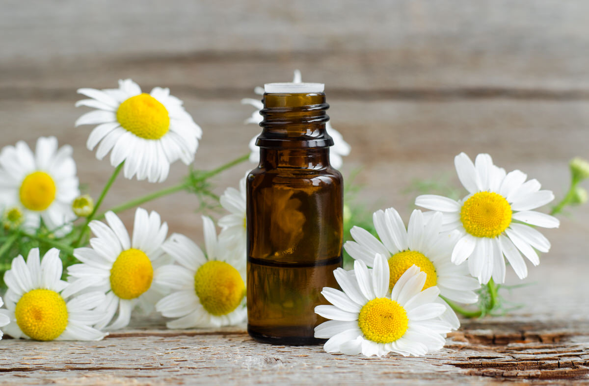 Chicago Apartments, Natural Sleeping Solutions, Chamomile