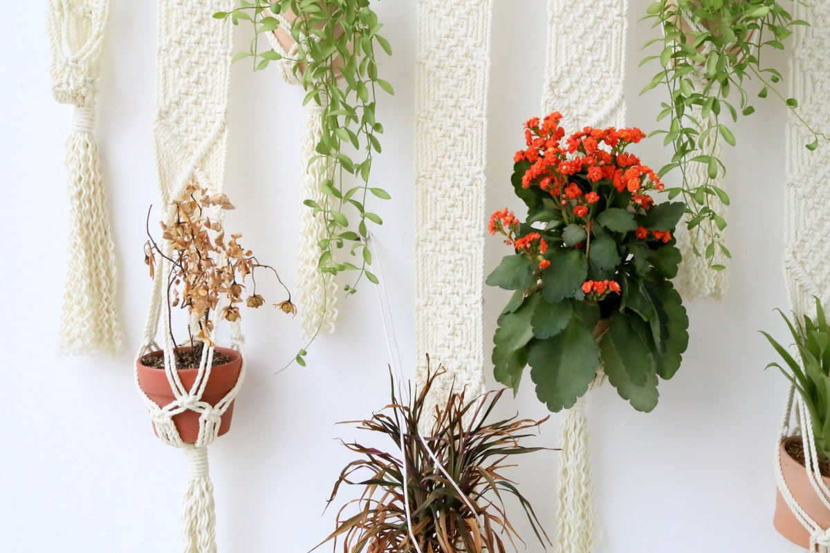 plant hanging tips 3