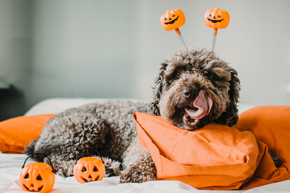 How to Spend Halloween at Home: Party with Your Pet