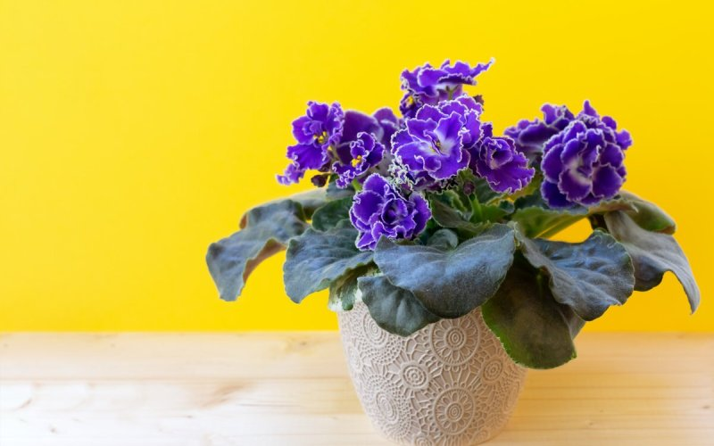 fall-blooming houseplants