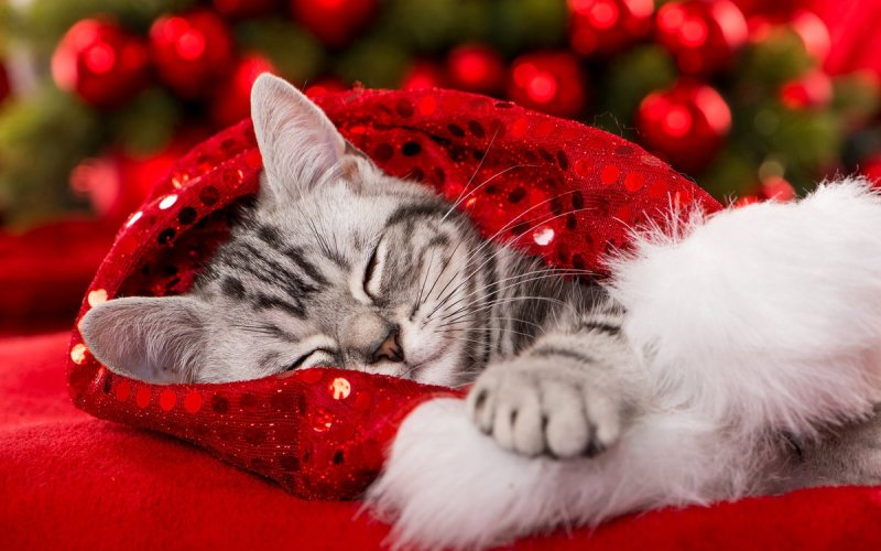 pet proof your apartment for the holidays