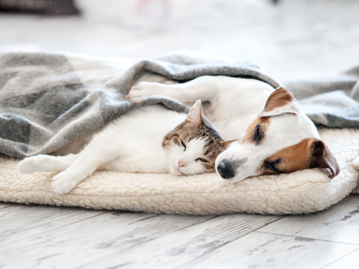 fostering dogs and cats
