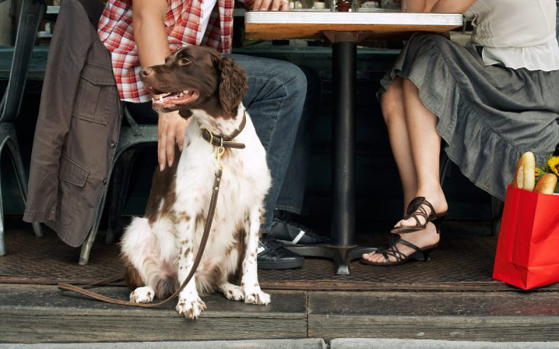 dog friendly restaurants in chicago