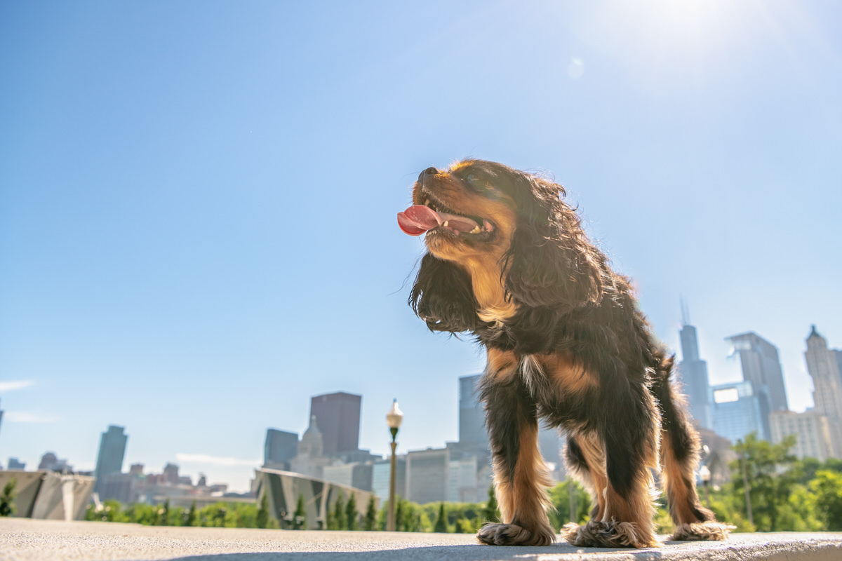 Where to Adopt a Dog in Chicago