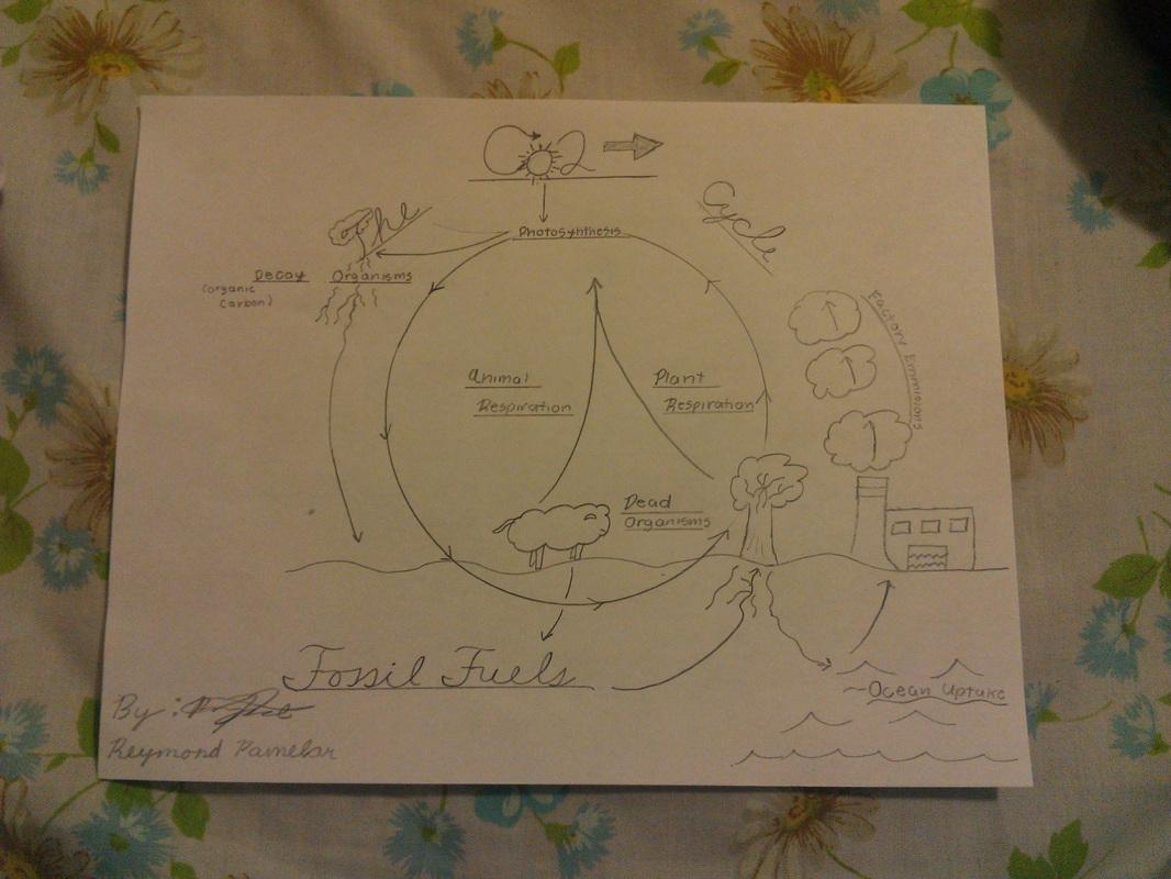 Webquest Biogeochemical Cycles