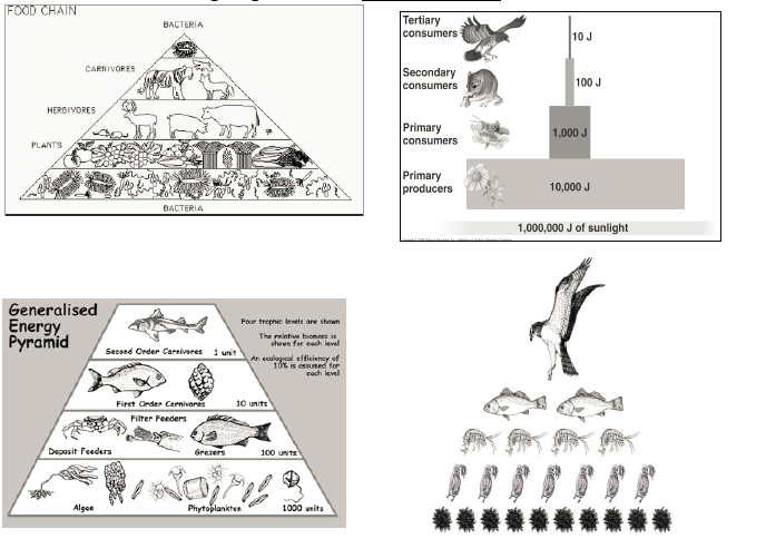 Apes Food For Thought... Trophic Levels (unifinished