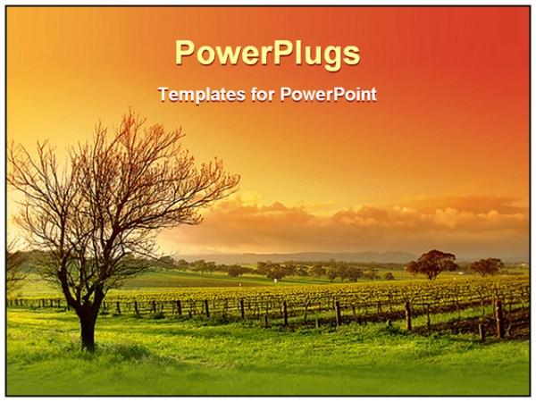 powerpoint template vineyard landscape