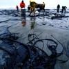 Scientist Confirms Gulf