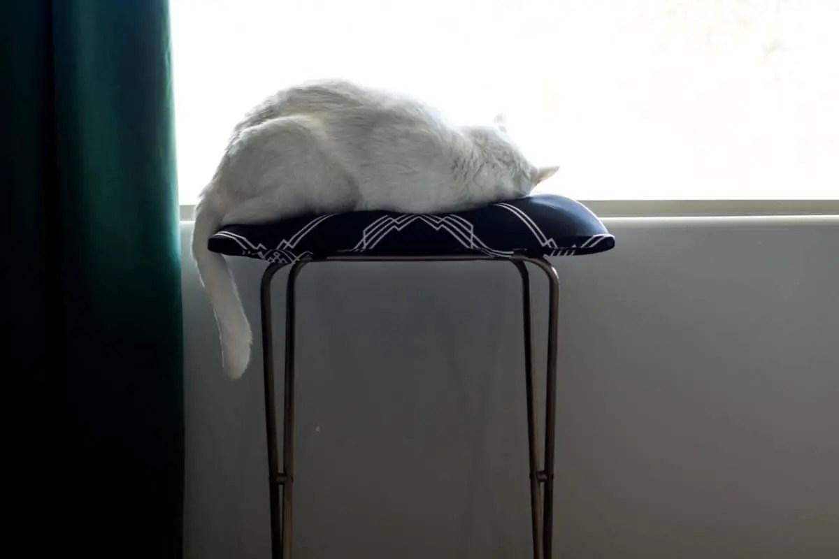 $5 DIY Cat Day Bed