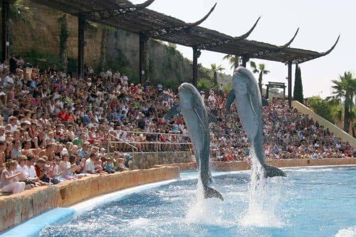 Dolphins at Mundomar in Benidorm