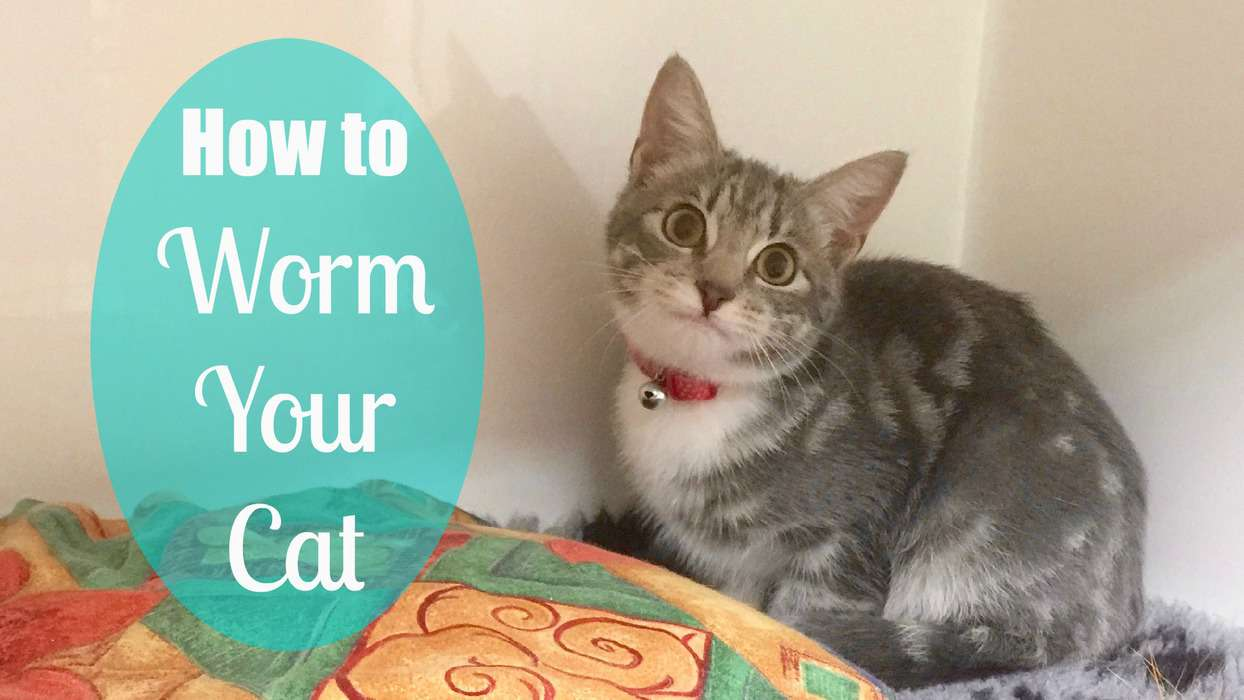 how to worm your cat
