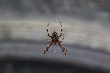 Spider on a car