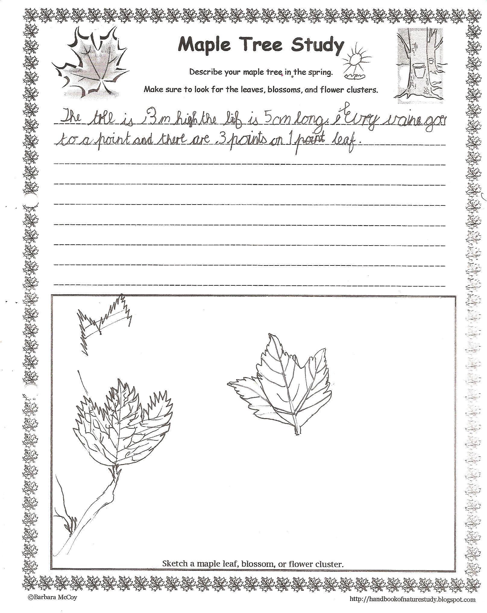 Tree Rubbing Worksheet